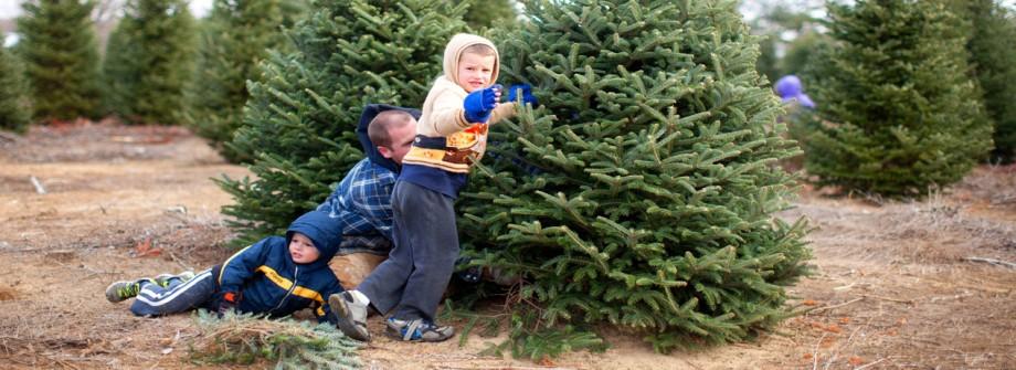 U Cut Christmas Trees.William Sloan S U Cut